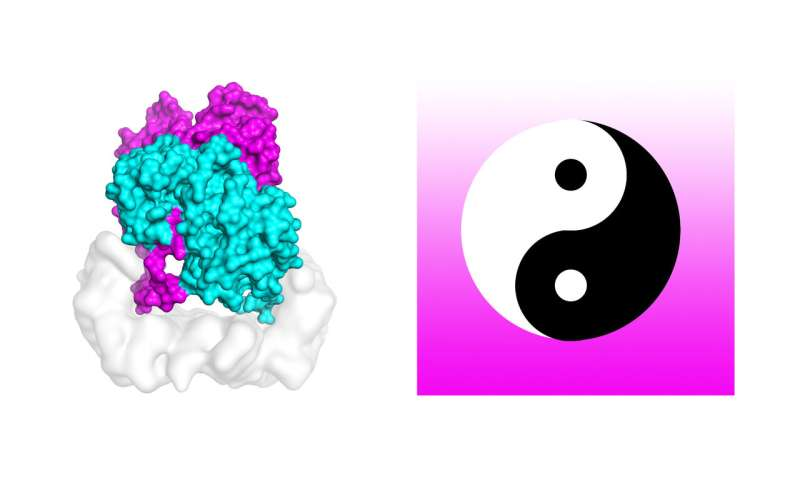 Skin cancer mystery revealed in yin and yang protein
