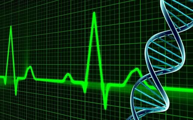 Skin-cells-turned-to-heart-cells help unravel genetic underpinnings of cardiac function