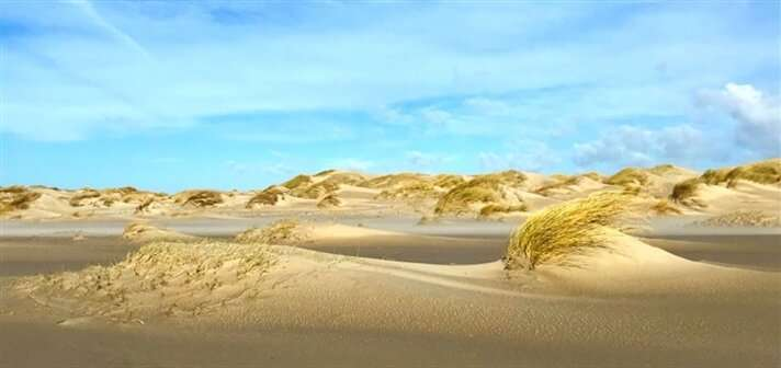 Small steps, big leaps – how marram grass builds dunes