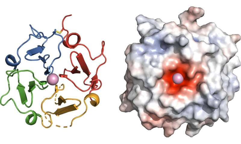 **Solving long-sought protein structure opens new avenues for treating disease
