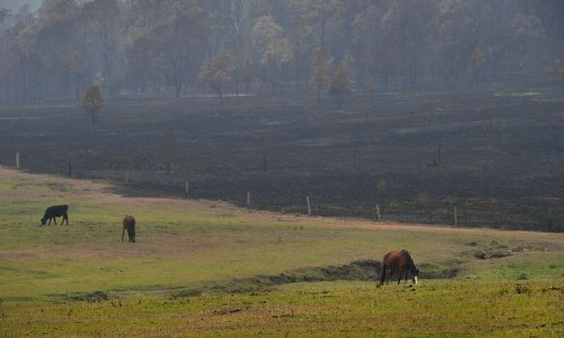 Some animals had to be led to safety, away from the worst of the fires