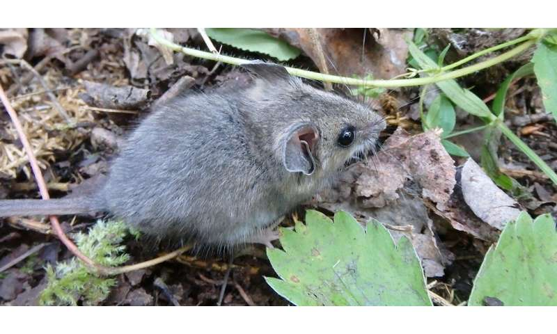 Some small mammals undeterred by industrial activity, study shows