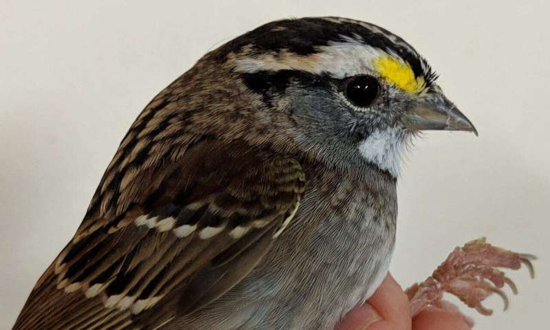 Songbird-body changes that allow migration may have human health implications