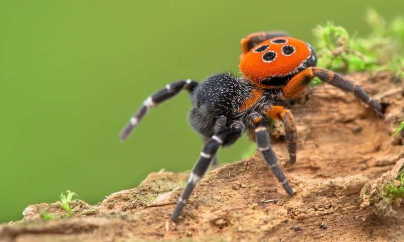 Spiders are threatened by climate change, and even arachnophobes should be worried