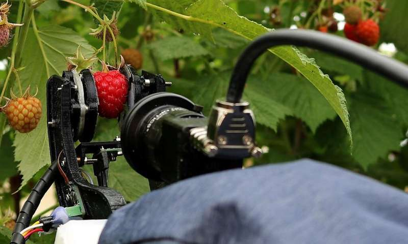 Spinout completes initial field trials of raspberry harvesting robot system
