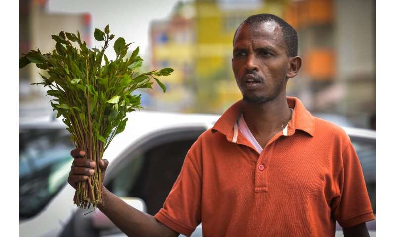 Sporadic campaigns by local civil society groups have failed to result in a ban on khat like those imposed in Britain and the Un