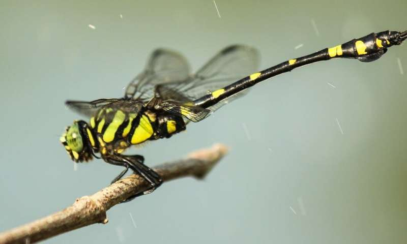 Stripes can help prey stay hidden on the move, our new research reveals