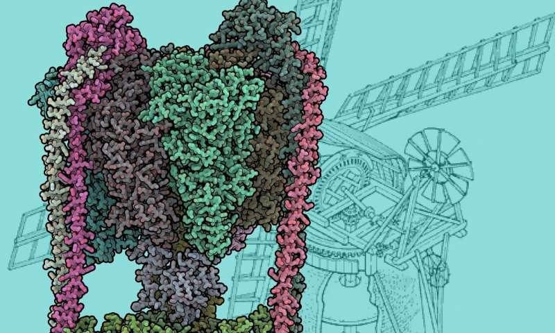 Structure of protein nano turbine revealed