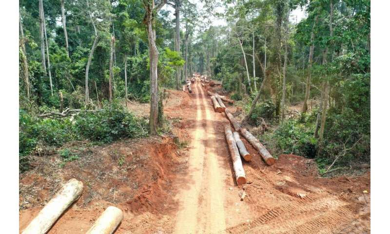 Study documents impacts of selective logging on Congo's intact forest landscapes