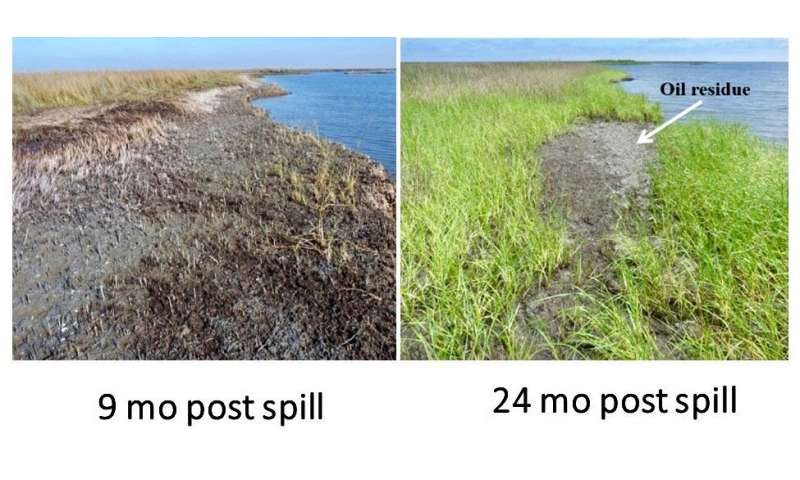 Study shows continuing impacts of Deepwater Horizon oil spill