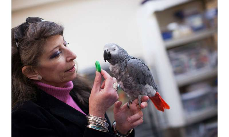 Study shows parrots can pass classic test of intelligence
