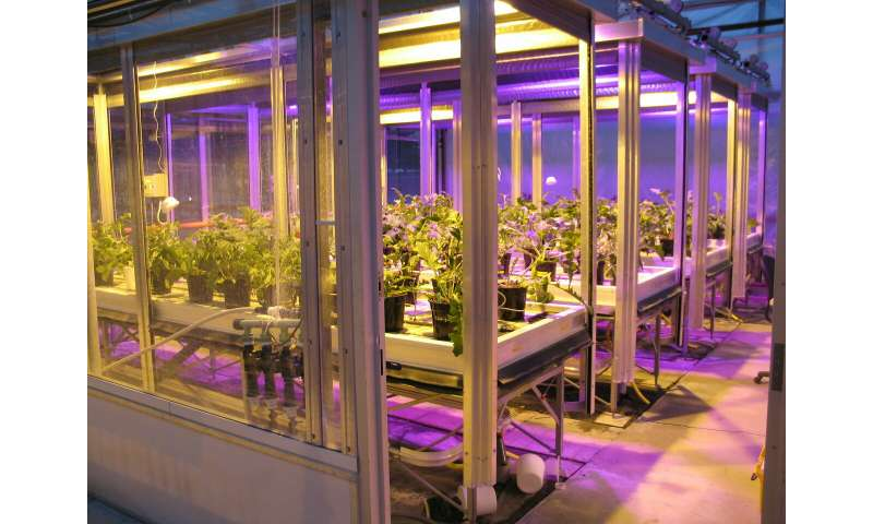 Substituting HPS with light-emitting diodes for supplemental lighting in greenhouses