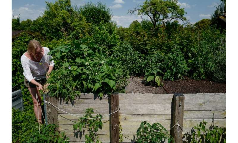 Suzanne Johnson (pictured) is among tens of thousands of allotment holders in Berlin