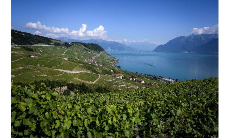 Swiss wines may not currently be well-known outside of the country but a new export promotion strategy aims to change that