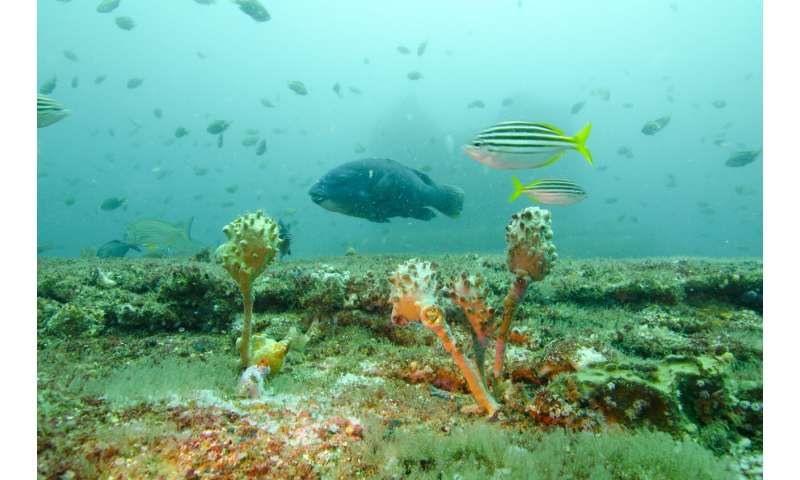 Sydney's desalination discharge boosts fish life in time of climate uncertainty