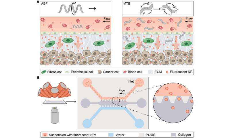 Synthetic and living micropropellers support convection-enhanced nanoparticle transport