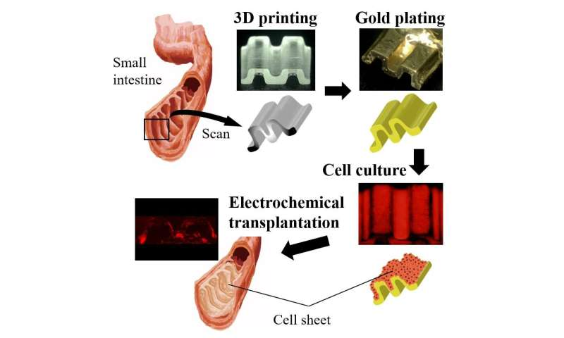 Tailored 'cell sheets' to improve post-operative wound closing and healing