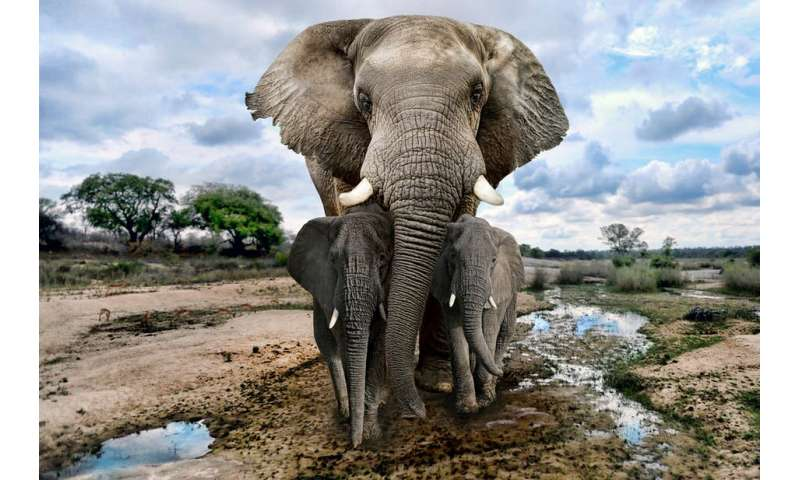 Technology is useful, but drones alone won't save Africa's elephants