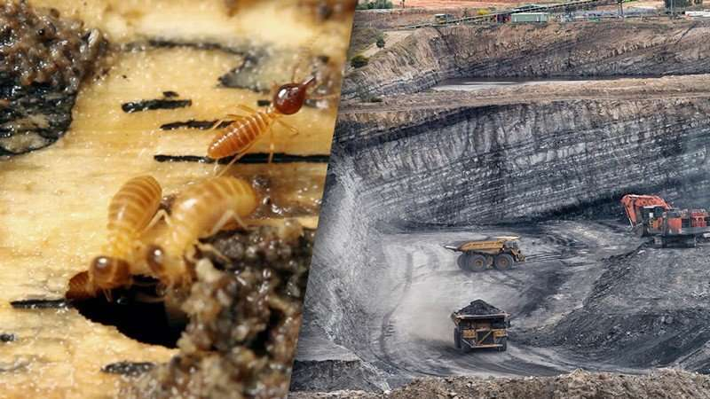 Termite-gut microbes extract clean energy from coal