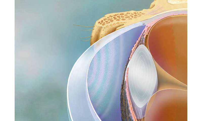 Testing corneal cell quality? Apply physics
