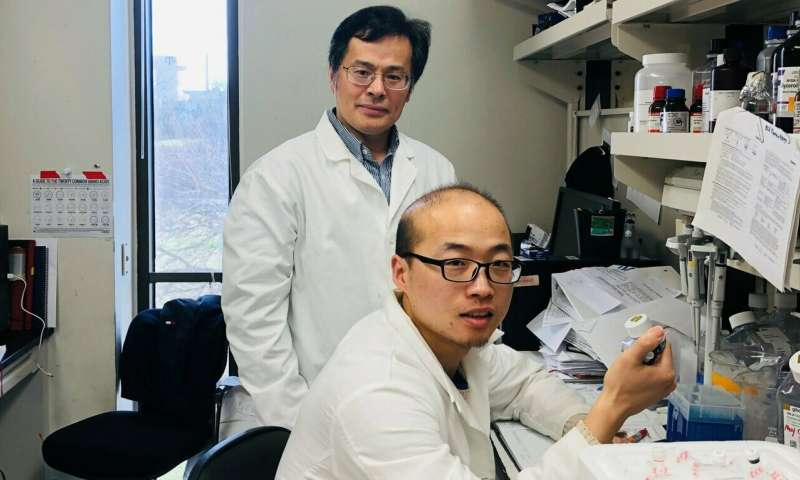 Texas A&M-led study explores the role of estrogen in controlling Type 2 diabetes