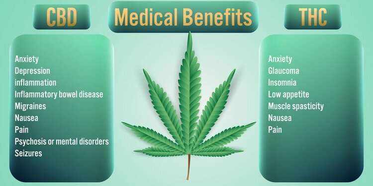 THC more important for therapeutic effects in cannabis than previously believed