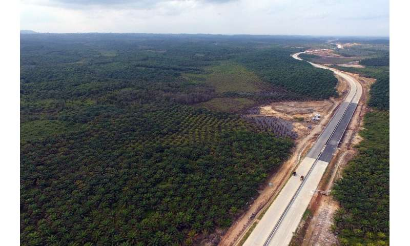 The area around Samboja, Kutai Kartanegara, is  one of two locations in Eastern Kalimantan chosen as a possible site for the new