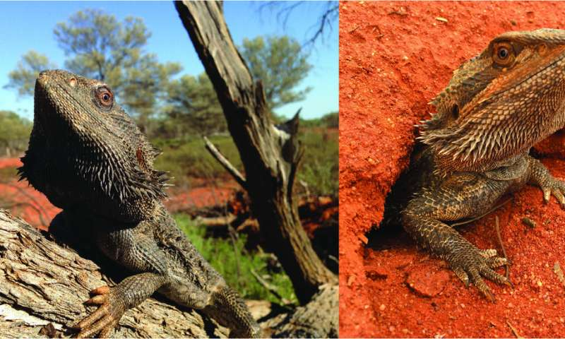 The Birds and the Bees and the Bearded Dragons—Evolution of a Sex-Determination System