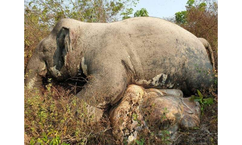 The body of a male Asian elephant was found in a wildlife sanctuary in northeastern Cambodia on Sunday