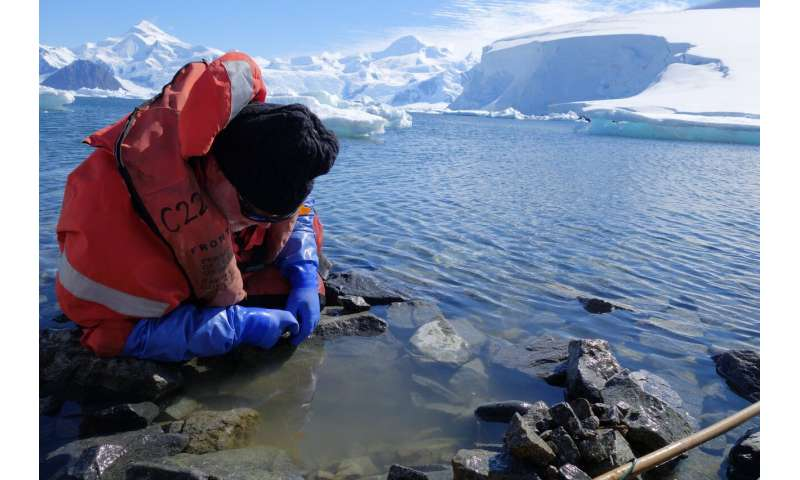 The complex fate of Antarctic species in the face of a changing climate