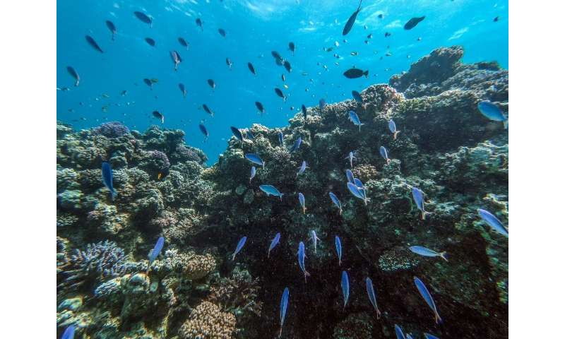 The dazzling turquoise waters and coral reefs off Egypt's Red Sea coast attract scuba divers, but plastic trash and global warmi