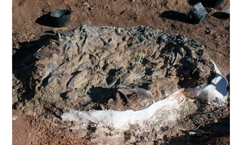 The fossilised dinosaur remains discovered in western Argentina are believed to be 220 million years old