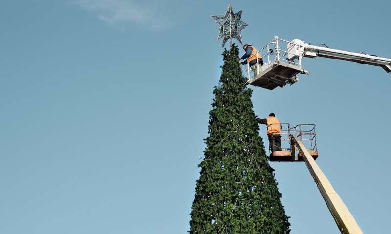The great Christmas tree debate: Is it better to buy a real tree or a fake one?