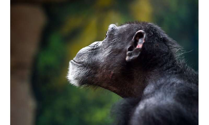The last common ancestor of humans and chimpanzees lived about seven million years ago