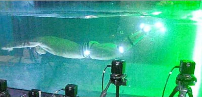 The physics of undulatory human swimming