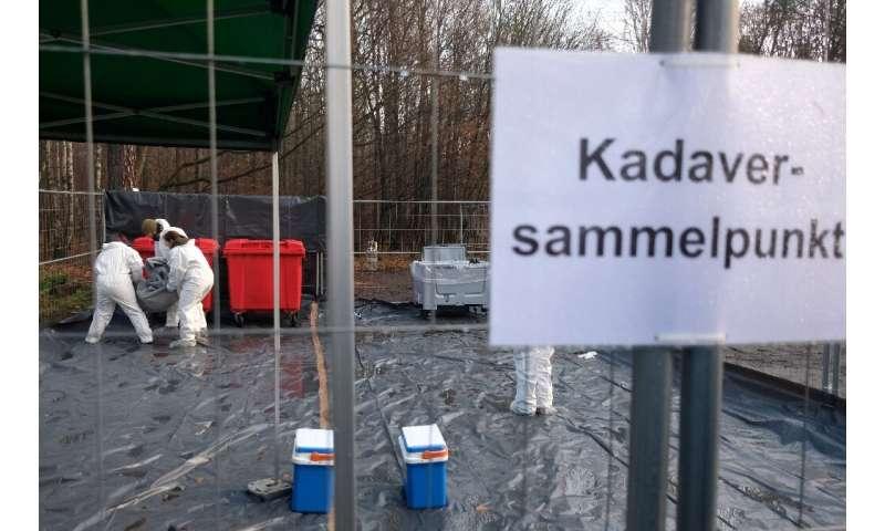 """""""La cuestión ya no es si la peste porcina llegará a Alemania, sino cuándo"""""""