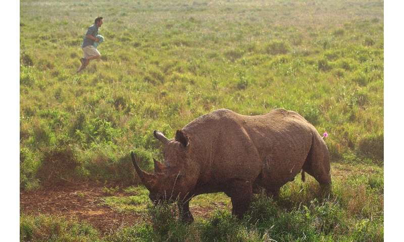 There are about 5,000 black rhinos remaining across their range in the wild, according to the International Union for Conservati
