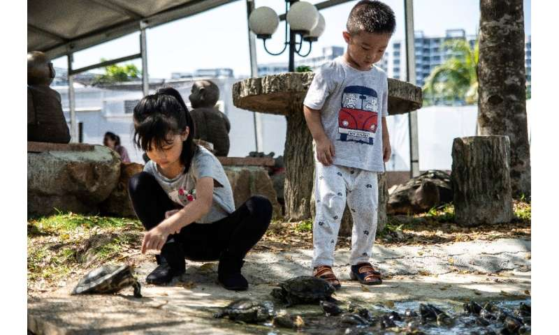 There are some 700 reptiles at the Live Turtle and Tortoise Museum in Singapore