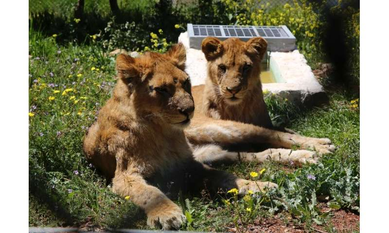 The sanctuary in Jerash province north of Amman cares for 26 animals