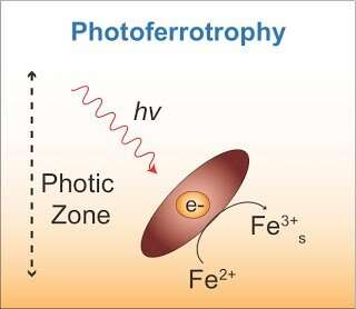These microbes 'eat' electrons for energy