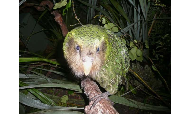 The setback comes just weeks after scientists hailed a bumper breeding season for the flightless, nocturnal bird, which was once