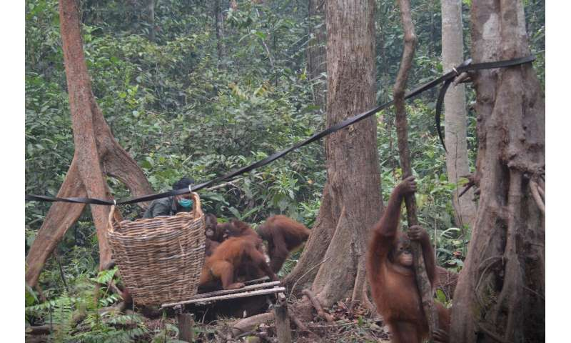 The toxic haze was so bad in parts of Kalimantan that rescuers at an Orangutan shelter were keeping the great apes indoors for m
