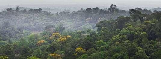 The value of vegetation