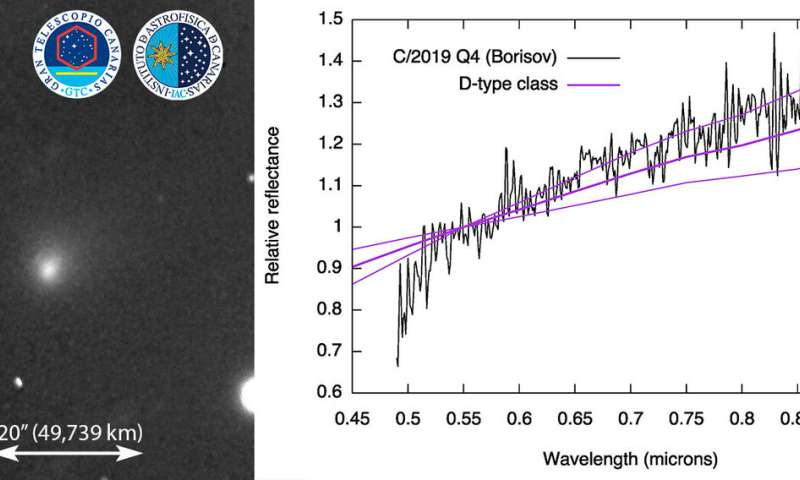 The visible spectrum of C/2019 Q4 (Borisov), the first confirmed interstellar comet