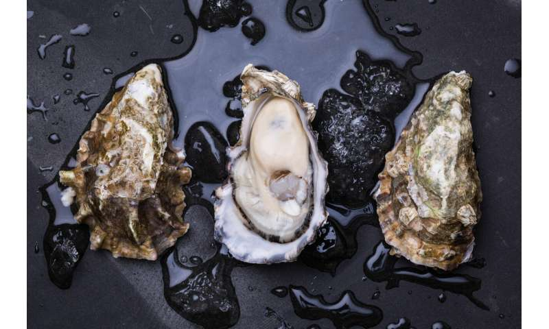 The world's shellfish are under threat as our oceans become more acidic