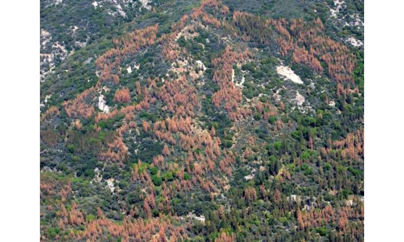 Thinning forests, prescribed fire before drought reduced tree loss