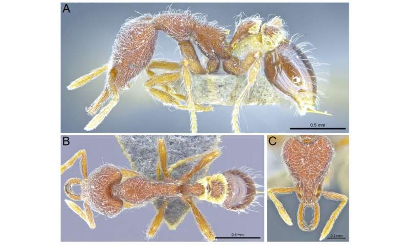 Thirteen new ant species discovered in Hong Kong