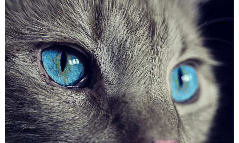 Through the eyes of animals
