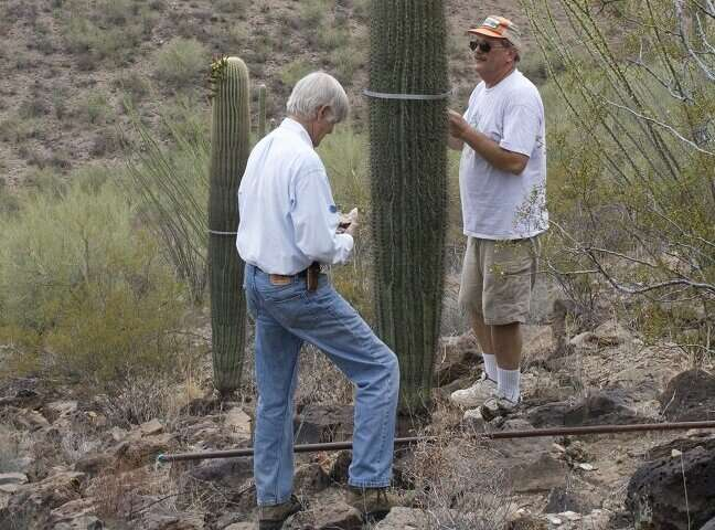 Topography could save sensitive saguaros as climate changes