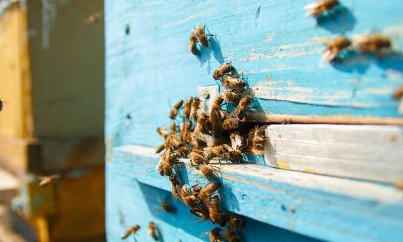 Para salvar a las abejas melíferas necesitamos diseñarles nuevas colmenas